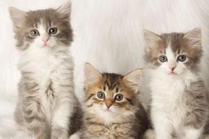 AZ Friends for Life Animal Rescue | Pet Rescue & Shelter